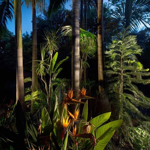 Wendy's Secret Garden Arkies Bangalow Palms and Wollemi Pine