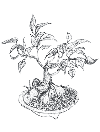 Wendy's Bonsai Sketch